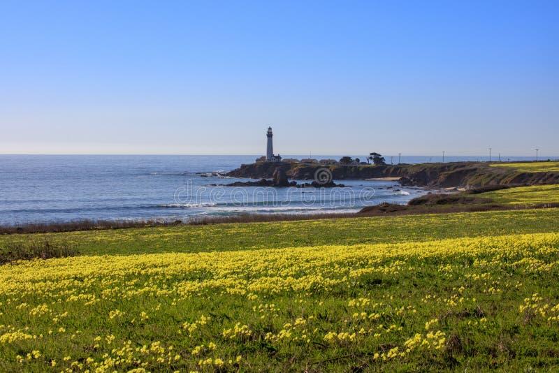 Vildblommor längs den Kalifornien kustlinjen vid Stilla havet royaltyfri foto