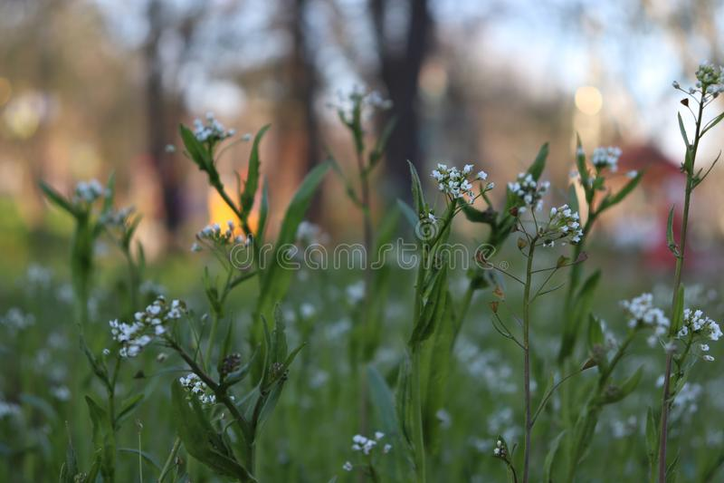 Vildblommor landskap lycklig bra tid arkivfoton