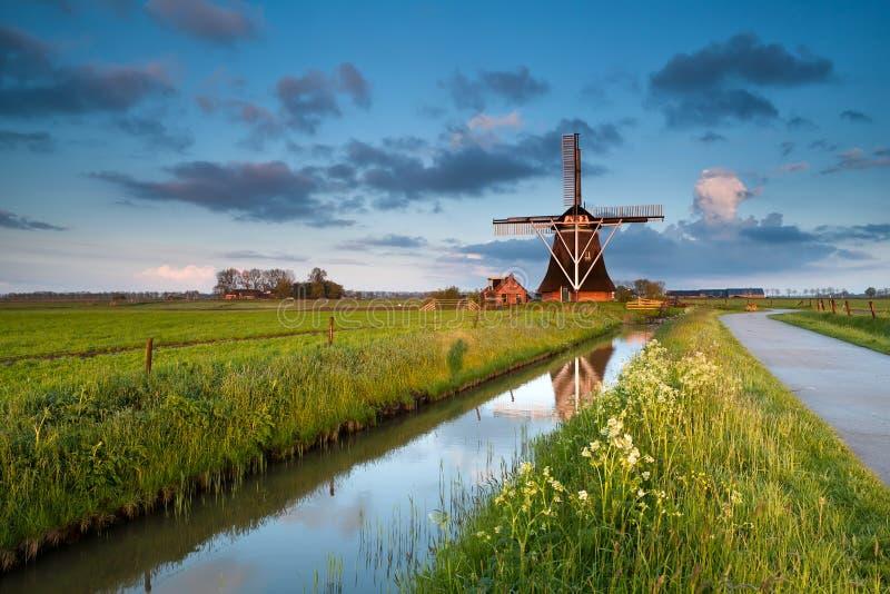 Vildblommor och holländsk väderkvarn på soluppgång arkivfoto