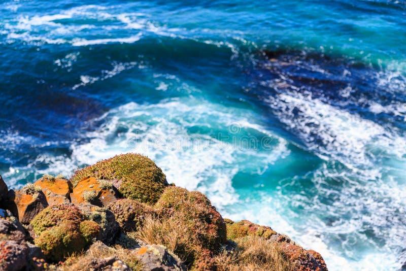 Vildblommor på en klippa vid havet arkivfoto
