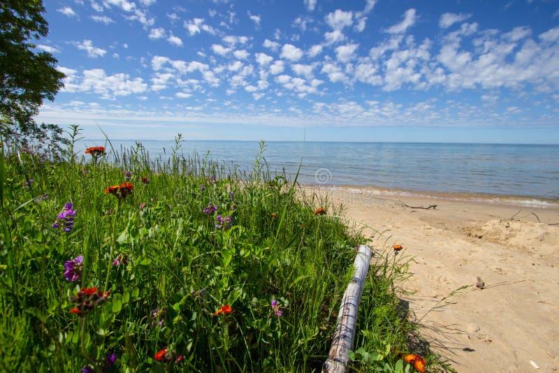 Vildblommor på en scenisk Michigan strand arkivbilder