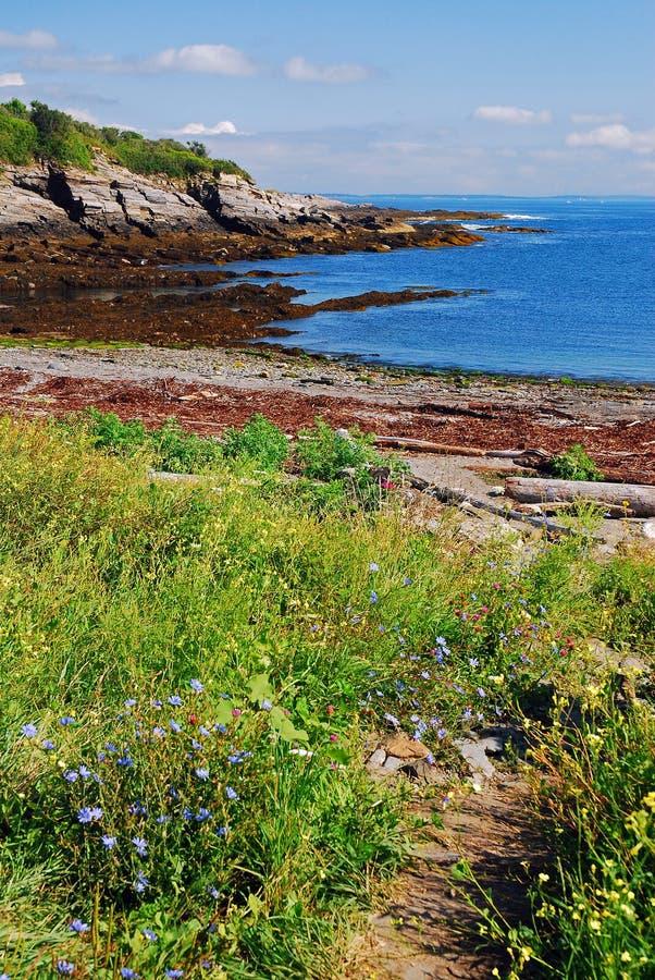 Vildblommor på en stenig kust arkivbilder