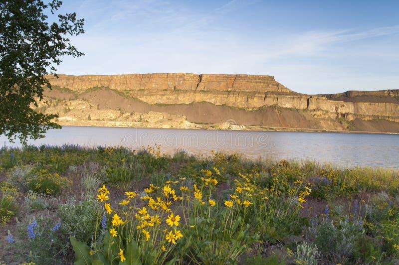 Vildblommor runt om bank sjöångbåten vaggar delstatsparken royaltyfri bild