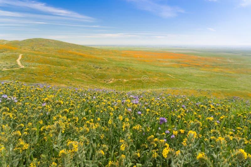 Vildblommor som blommar på kullarna i vår, Kalifornien arkivbild