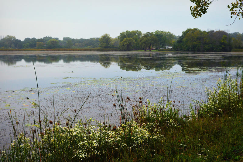 Vildblommor vid sjön arkivbilder