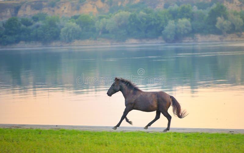Vildhäst nära Danube River arkivbilder