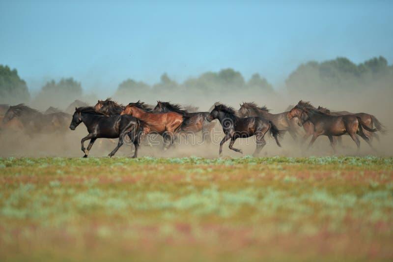 Vildhästar i Donaudelta royaltyfria bilder