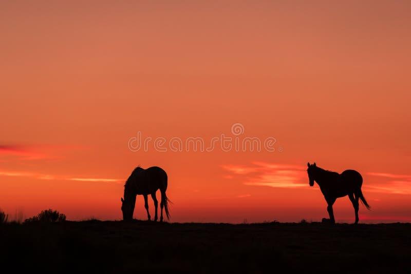 Vildhästar i en ökensoluppgång royaltyfri bild