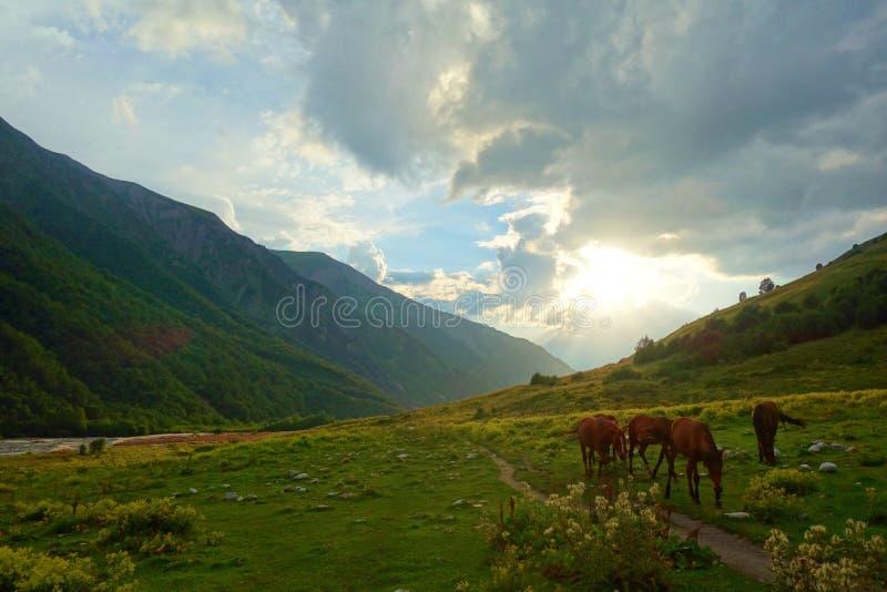 Vildhästar i en färgrik dal under solnedgång på en fotvandra slinga som leder från Mestia till Ushguli, Georgia fotografering för bildbyråer