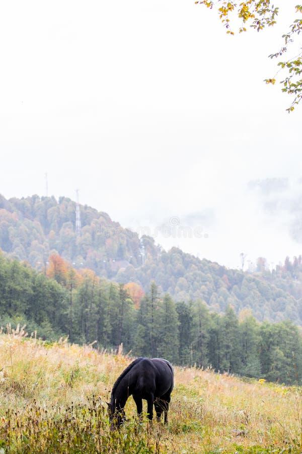 Vildhästar på en äng fotografering för bildbyråer