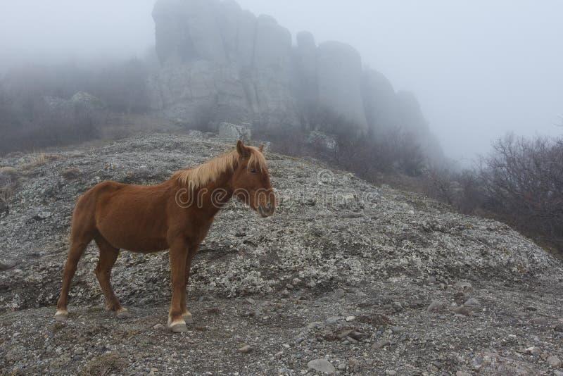 Vildhästen i natur, betar och berg royaltyfri fotografi
