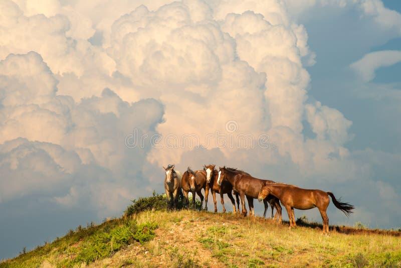 Vildhästflock, hästar, stormmoln royaltyfri foto
