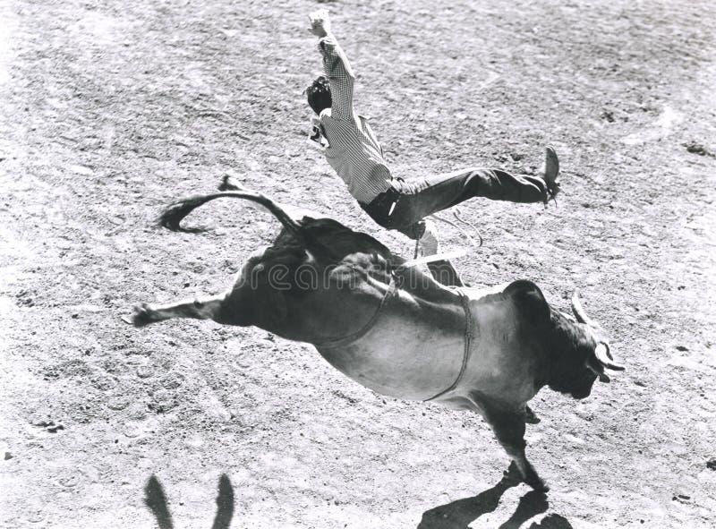 Vildhästrackare royaltyfri foto