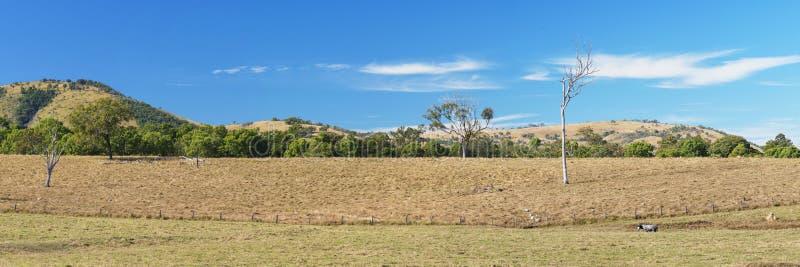Vildmarkberg och fält i den sceniska kanten, Queensland royaltyfri bild