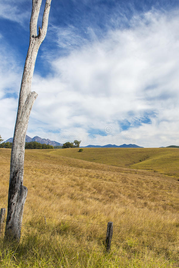Vildmarkberg och fält i den sceniska kanten, Queensland royaltyfri fotografi