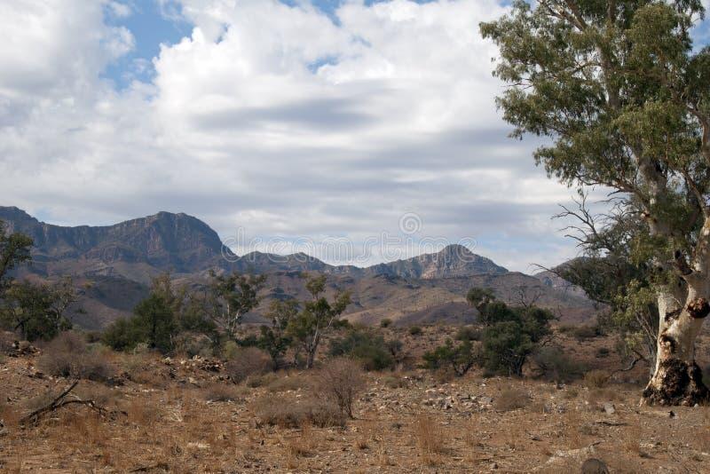 vildmarklandskap av Flindersområdena arkivbilder