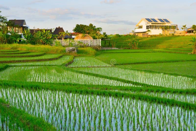 Villa, bali , rice fields, Asia royalty free stock image