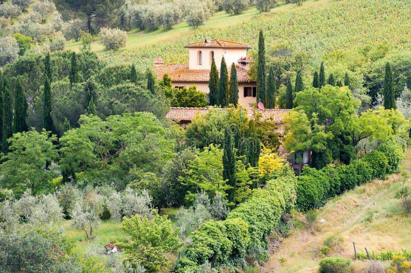 Villa with cypresses in vineyard in Tuscany, Italy. Typical tuscan villa with olive trees and vineyard in Bolgheri, Tuscany stock image