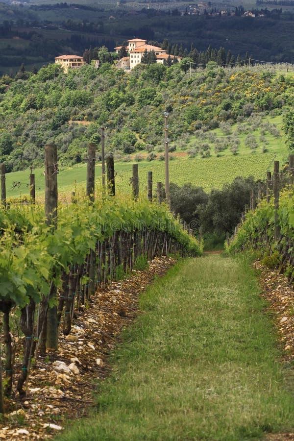 Villa et vigne toscanes photographie stock