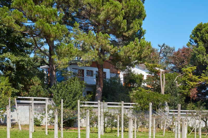 Villa with garden with maritime pine trees and cultivation in a sunny day, blue sky in Italy stock image
