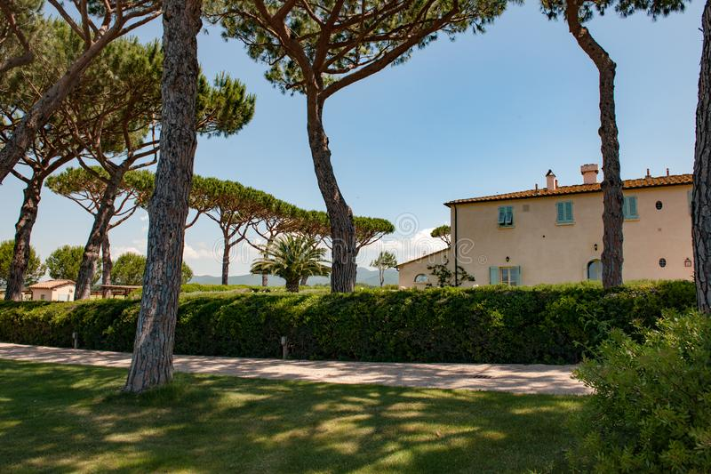 Villa with pines in Tuscany, Italy. Typical tuscan villa with hedge and pine trees in Bolgheri, Tuscany stock images
