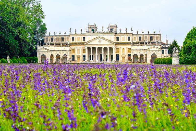 Villa Pisani purple flowers meadow Venice province Riviera del B stock image
