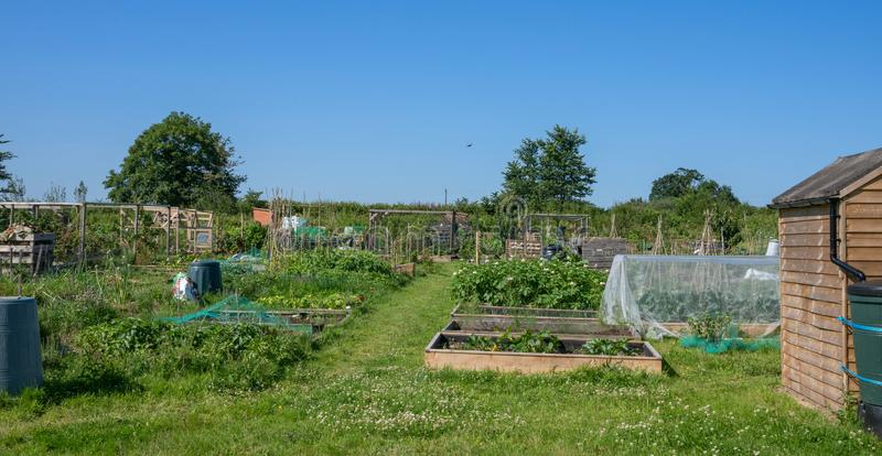 Village allotment garden for growing fruit and vegetables. Typical English village allotment garden for growing fruit and vegetables stock image