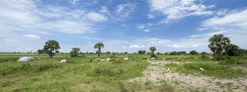 Village along white nile, south sudan royalty free stock photography
