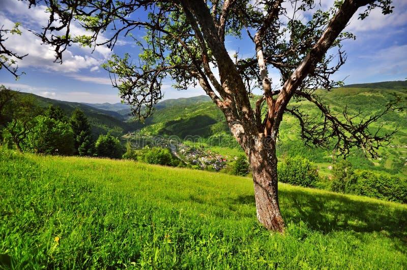 Download Village in the Carpathians stock photo. Image of peak - 25046194