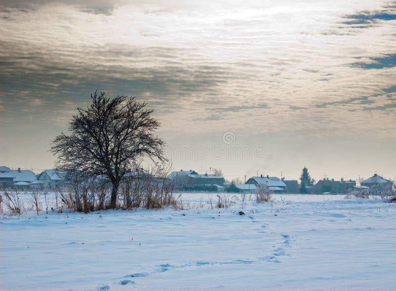 village d'arbre photos libres de droits