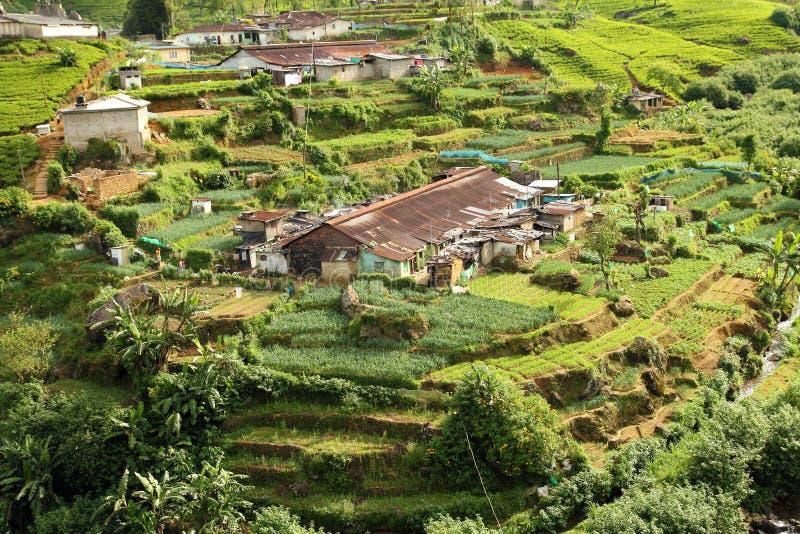 Village de plantation de thé images stock