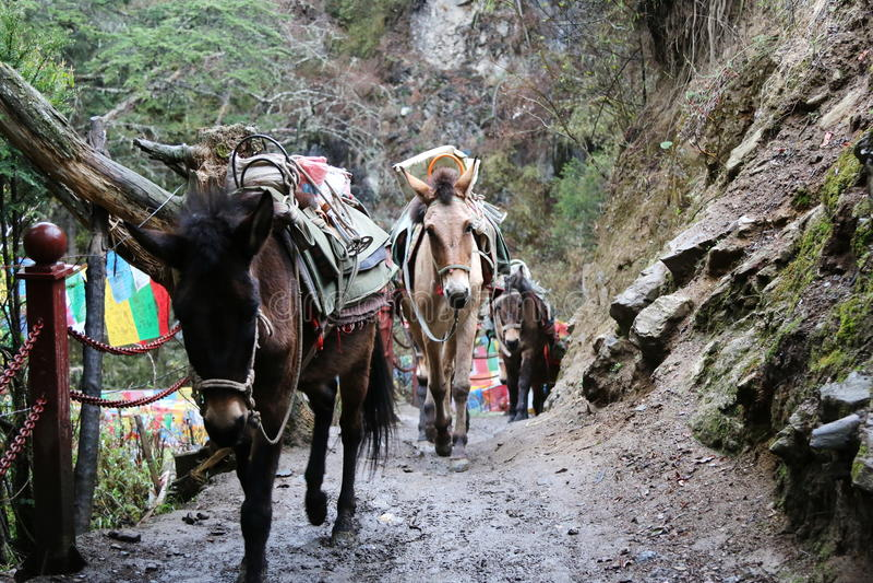 Village de vallée de Yubeng photographie stock libre de droits