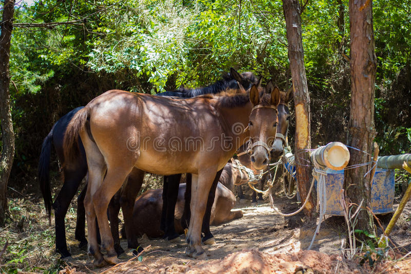 Village Donkeys stock photography