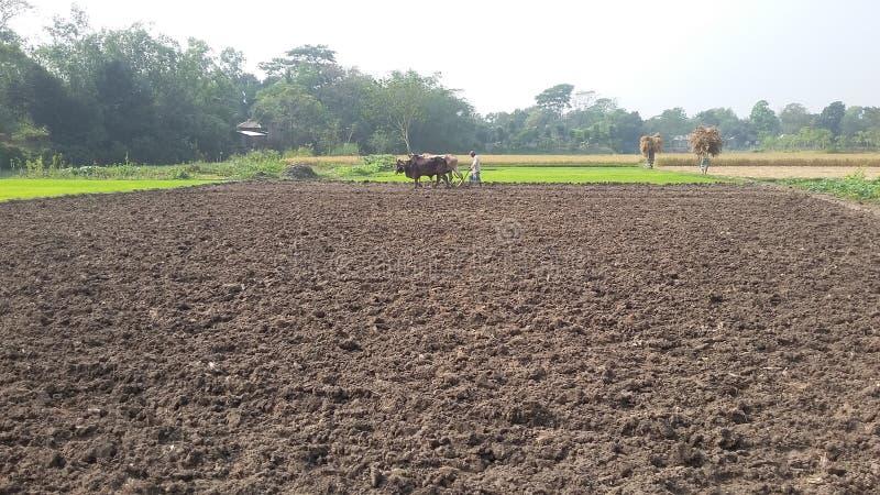 Village du Bangladesh photos libres de droits