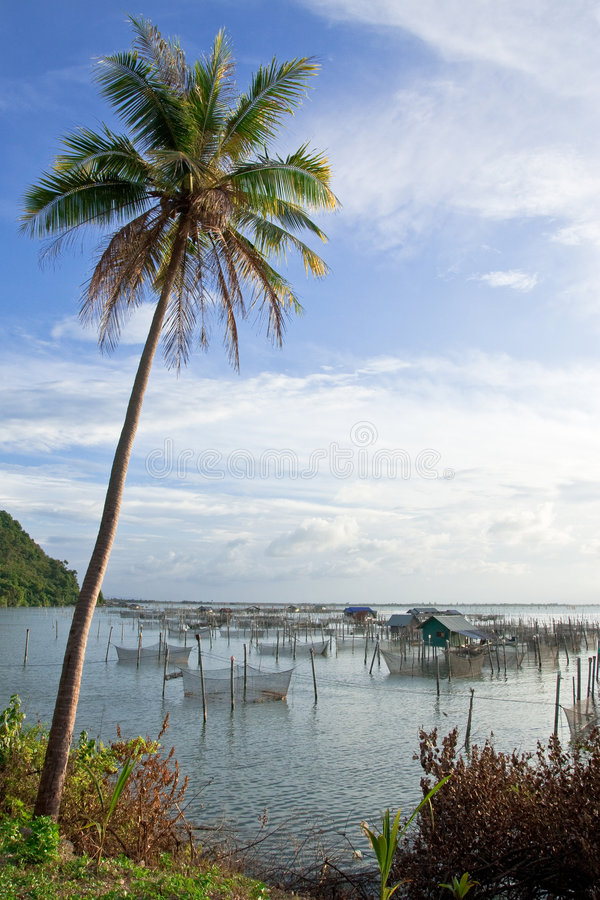 Download Village Du Sud De La Thaïlande De Pêcheur Photo stock - Image du alimentation, vous: 8651322