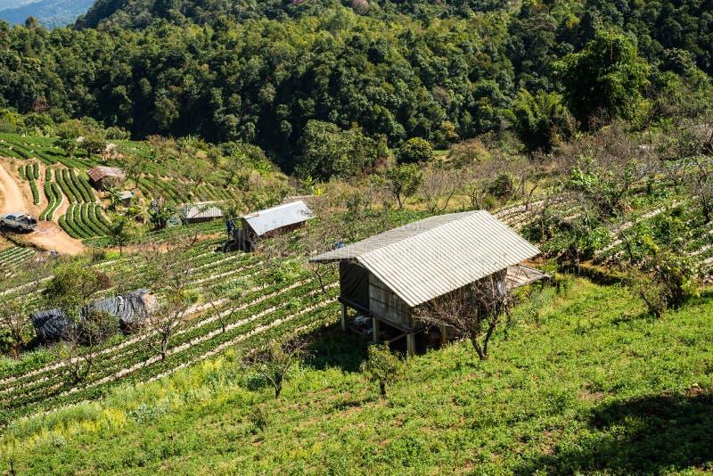 Village et ferme de Hilltribe chez Doi Ang Khang, Chiang Mai, Thailan photo stock