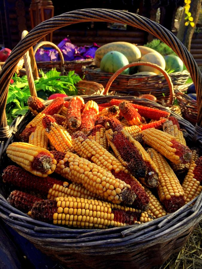Village fair. Bright colors of vegetables. Autumn royalty free stock photo