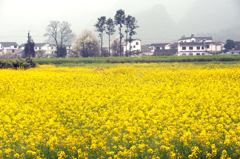 Village and flower plantation scenery in Wanfenglin,Guizhou in C. Village and flower plantation scenery in Wanfenglin,Guizhou province in Southwestern of China stock photo
