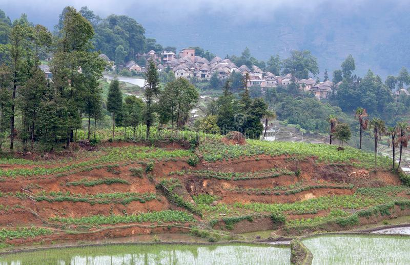 Village in Yuanyang county, Yunnan, China. Village of Hani ethnic people over terraced rice fields in Yuanyang, Yunnan, China. Mushroom houses are durable, and royalty free stock photos