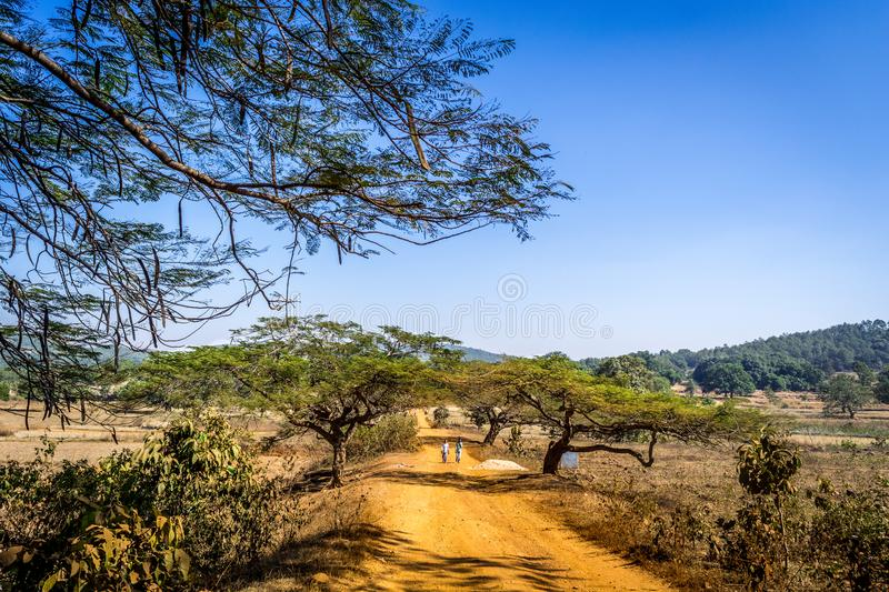 A village in Keonjhar district, Odisha. Dusty village path in keonjhar district , Odisha royalty free stock photography