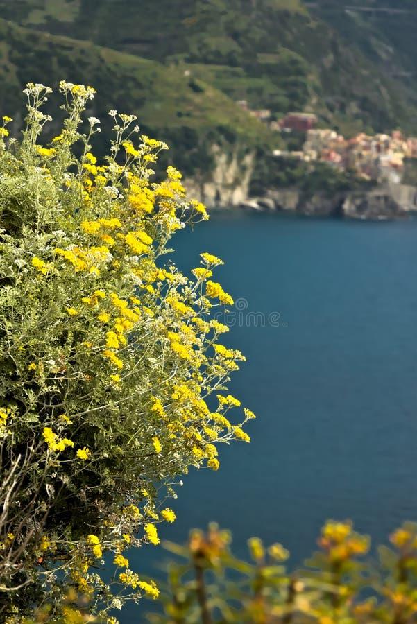 The village of Manarola seen from Corniglia royalty free stock photos