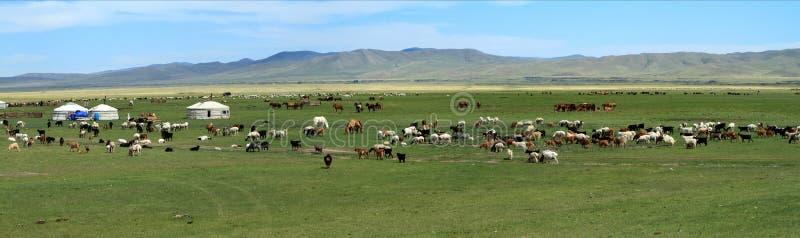 Village Mongolie de Yurt photos libres de droits