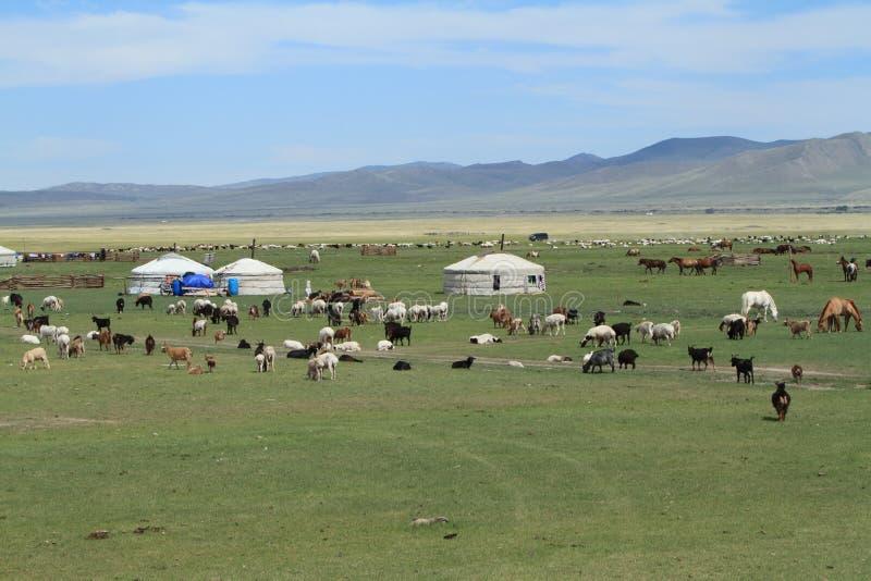 Village Mongolie de Yurt photographie stock libre de droits