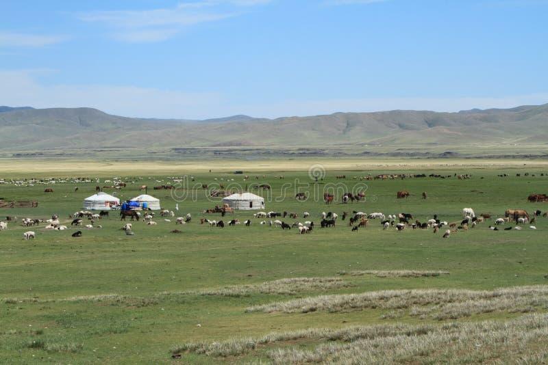 Village Mongolie de Yurt photo stock