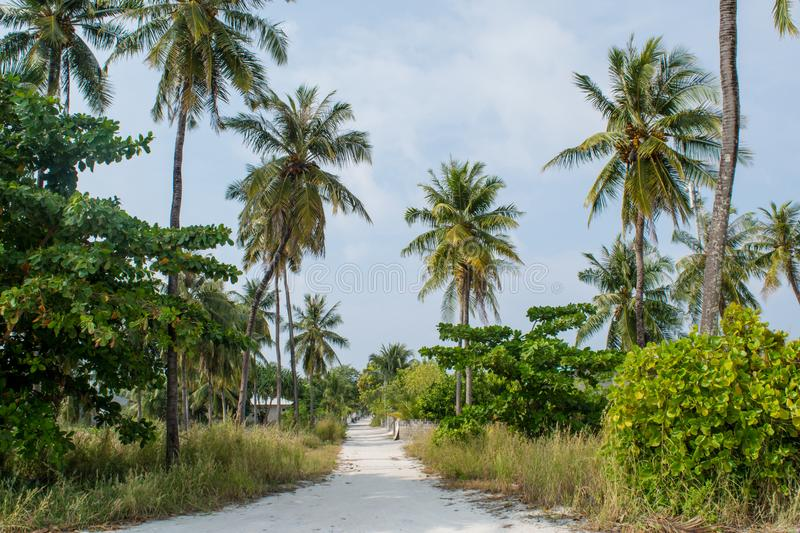 Village road surrounded by palm trees and bushes stock photography