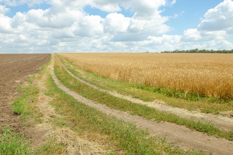 Village road in wheat field under cloudy sky. royalty free stock photos