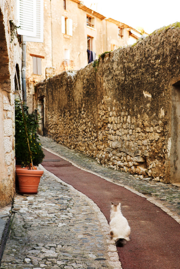 Village of St Paul. White cat sitting in an alleyway in the quaint little French hilltop village of Saint-Paul de Vence, Southern France, Alpes Maritimes, next royalty free stock image
