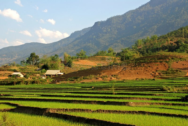 Village in the terrace field stock image