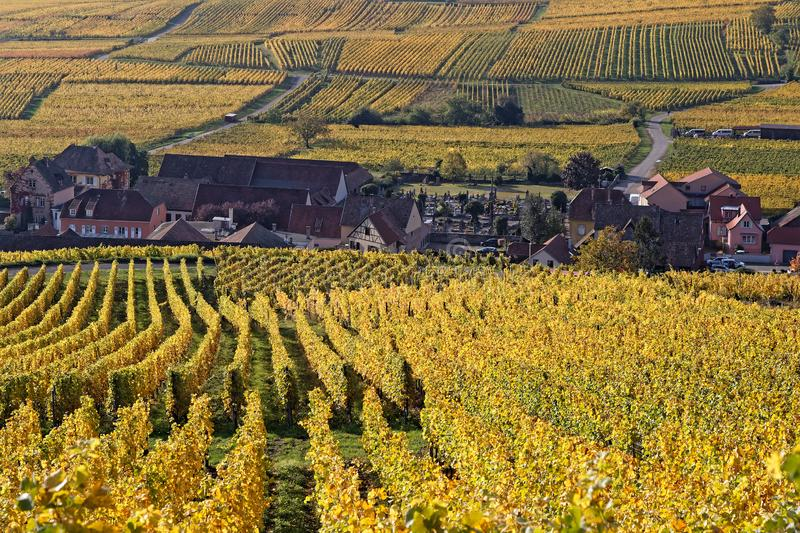 A village among the vineyards at fall stock photo