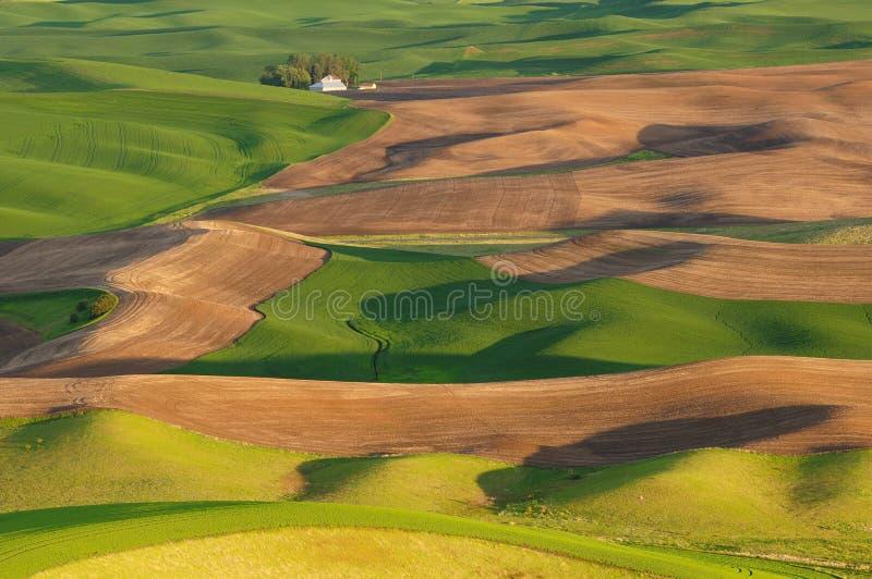 Village on wheat field royalty free stock photos